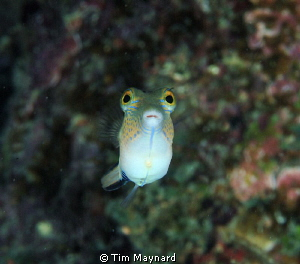 This little guy was quite curious outside the port of Uti... by Tim Maynard