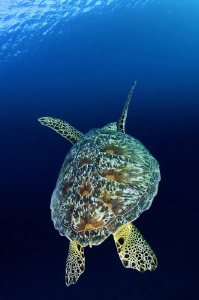 One of the few images of marine life that seems to look g... by Paul Colley