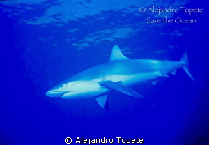 Reef  Shark  close encounter, Blue Hole  Belize by Alejandro Topete