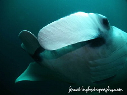Manta ray gets inquisitive