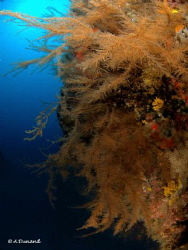 Reef at 30 meters down, Playa Chica, Lanzarote, Canary Is... by Alexia Dunand