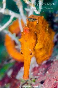 Sea Horse Face, Acapulco Mexico by Alejandro Topete