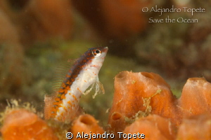 Fish in Orange, Veracruz Mexico by Alejandro Topete