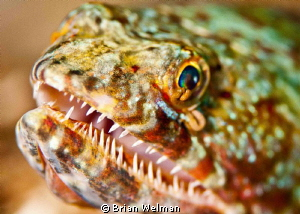 Lizard Fish Portrait by Brian Welman