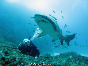 Diving at Fish Rock, NSW. G10, Canon Housing. Natural Li... by Peter Davey