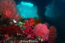 Raja Ampat windows.  Similar shot to the one Burt and Mau... by Ray Tibbles