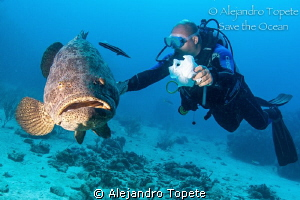 Goliat Grouper with Diver, Gardens of the Queen by Alejandro Topete