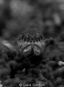 Lizardfish Bokeh by Luke Gordon
