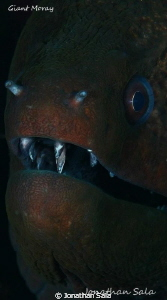 Moray portrait by Jonathan Sala