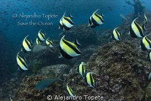 Morish Idol school, Galapagos Ecuador by Alejandro Topete