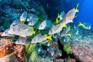 Group in the Reef, Galapagos Ecuador by Alejandro Topete