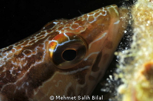 A close-up in Saros. by Mehmet Salih Bilal