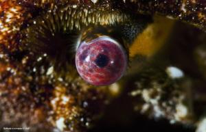 The eye, details of a crab eye. by Raffaele Livornese