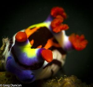 Nudibranch taken in East Timor f7.1 1/125 by Greg Duncan