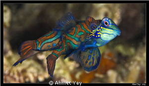 Love of Mandarins...:)