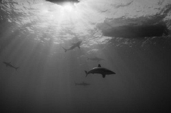 Sharks In The Light by Spencer Burrows