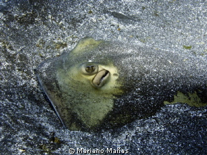 Ray fish sting by Mariano Mañas