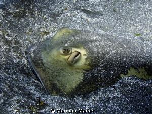 Ray fish sting by Mariano Mañas