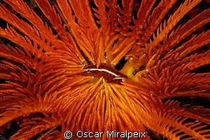 """Orange"" - Sweet home by Oscar Miralpeix"