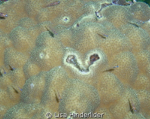 A Heart shape from the sea for Valentines Day! by Lisa Hinderlider