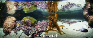Laguna Beach Tide Pool Panorama by Dale Kobetich
