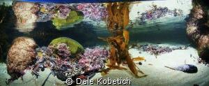 Laguna Beach Tide Pool Panorama by Dale Kobetich