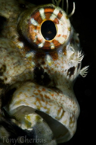 """Frankinblenny"" (Subsee +10 no crop) by Tony Cherbas"