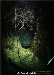Babinda eel, Canon 7D, 17-70mm macro, Sola-600 light. by David Haintz
