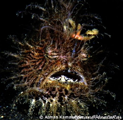 Hairy Frog Fish by Azman Kamaluddin
