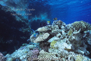 Reef  in sharm il sheik, Egipto by Alejandro Topete