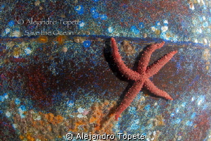 Star in the Wreck, La Paz Mexico by Alejandro Topete