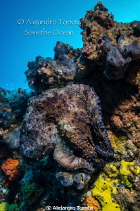 Can You find the octopus?, Galapagos Ecuador by Alejandro Topete
