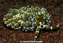 Rare species...! by Azman Kamaluddin