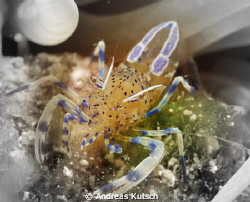 macro shot in the med with small changes by Andreas Kutsch