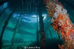 Under the pier, Raja Ampat by Leena Roy