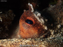 Octopus eye by Walter Bassi