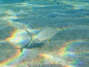 Rainbow Reflections- clear morning in the shallows by Lisa Hinderlider