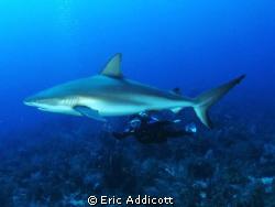Wife and shark, Canon S95 by Eric Addicott