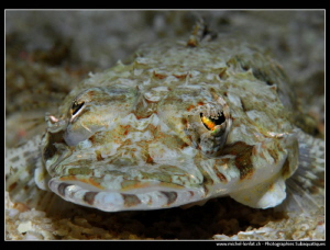 Young Crocodile Fish... :O)... by Michel Lonfat
