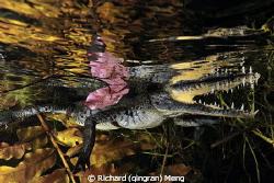 Crocdile style by Richard (qingran) Meng