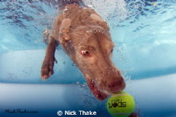 I know its been done... but its so much fun seeing dogs u... by Nick Thake