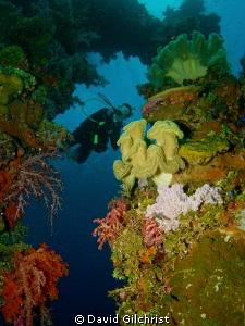 Exploring the Sanisan Maru, Truk Lagoon by David Gilchrist