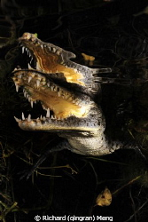 Crocodile Close-up by Richard (qingran) Meng