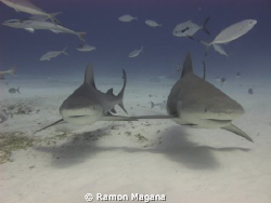 HOLDING FINS...!!! by Ramon Magana