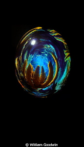 Egg No. 7 - polar coordinate tool and some shading and po... by William Goodwin