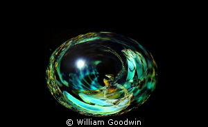 Egg No. 15 by William Goodwin