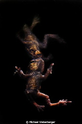 out of the dark!  This little frog is about to leave befo... by Michael Weberberger