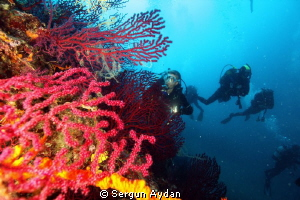 red corals by Sergun Aydan