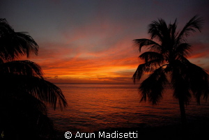 backyard sunset.... 02.03.13 by Arun Madisetti