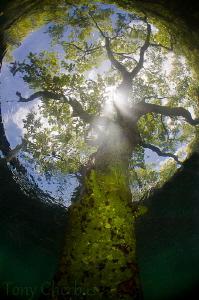 Up from the Underworld by Tony Cherbas